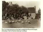 Roycroft_lamb